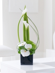 Contemporary Calla Lily and Orchid Sympathy Arrangement